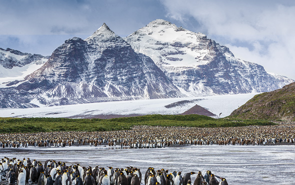 Antarctica, South Georgia & the Falkland Islands