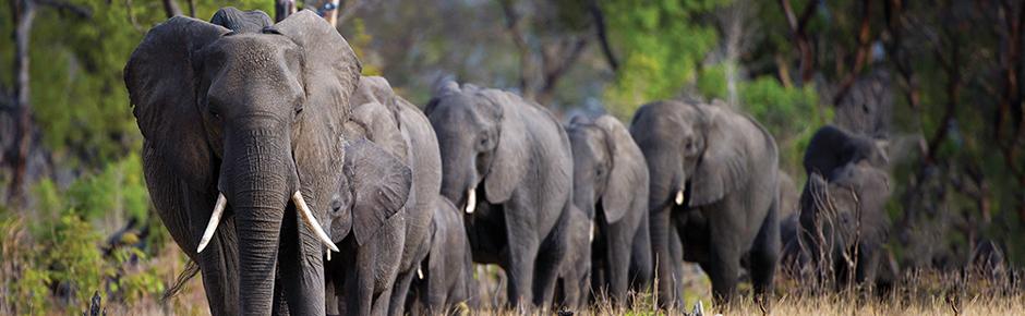 Wild + Wonderful Southern Africa: Botswana, Zimbabwe + Victoria Falls (2020 Itinerary)