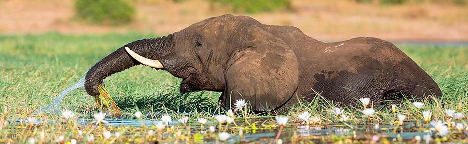 Chobe Game Park Safari