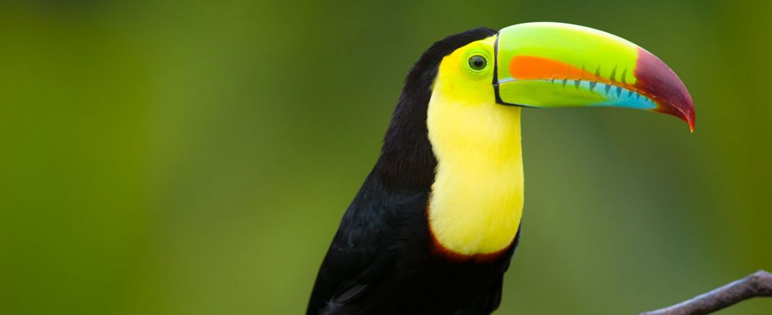 Costa Rica Natural Paradise