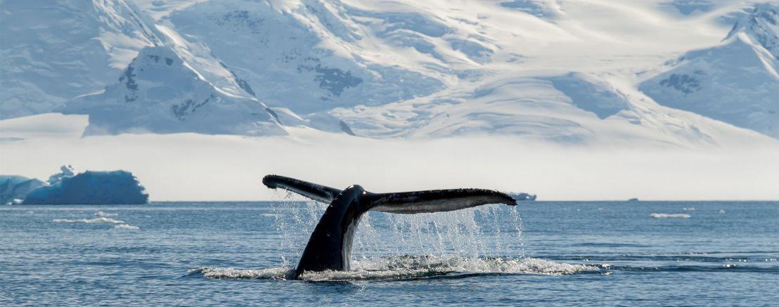 Antarctica & The Ross Sea Expedition (Hobart/Tasmania to Christchurch/Lyttleton)