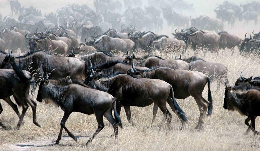 Great Migration: Tanzania & Kenya