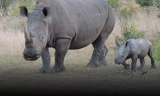 Botswana, South Africa & Zambia