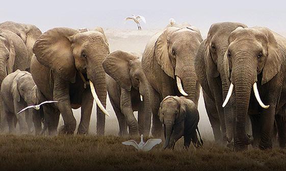 Kenya & Tanzania: A Classic Safari