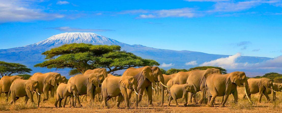 Kenya & Tanzania: The Safari Experience with Nairobi 2019 - 16 days from Nairobi to Arusha
