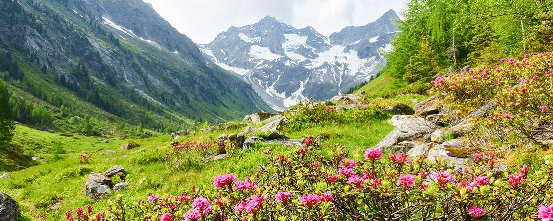 Alpine Countries 2019 - 15 days from Munich to Munich